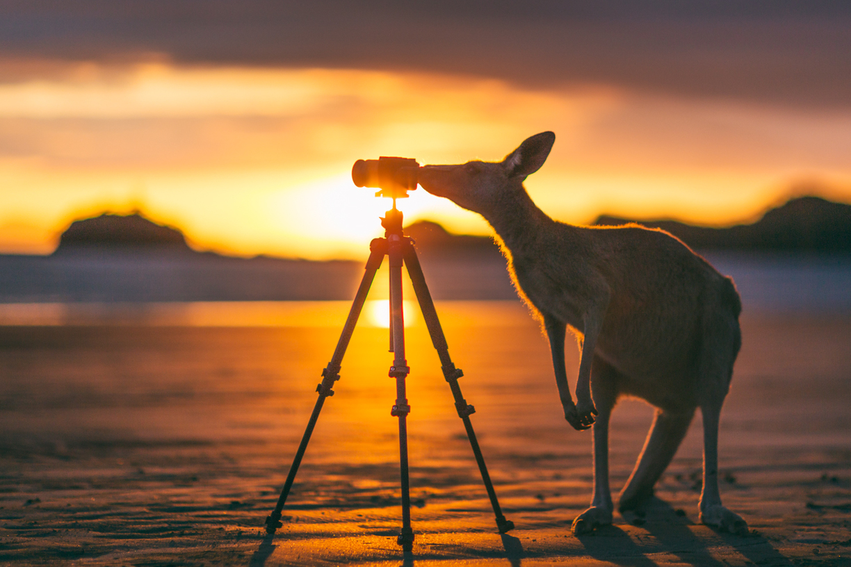 kinh nghiệm du lịch Úc tự túc p1