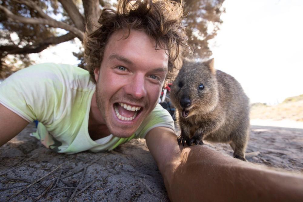 Bạn có thể gặp những chú chuột Quokka dễ thương khi đi du lịch Úc